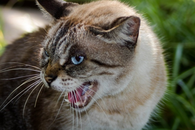 Bulgaria: French Government Hire Cats to Chase Out Rats in Ministry Buildings
