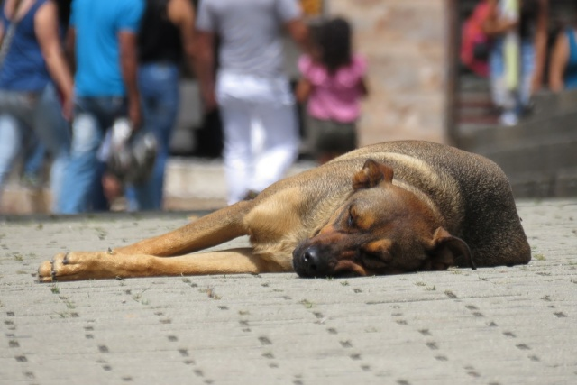 Bulgaria: Decrease in the Number of Stray Dogs Since 2013