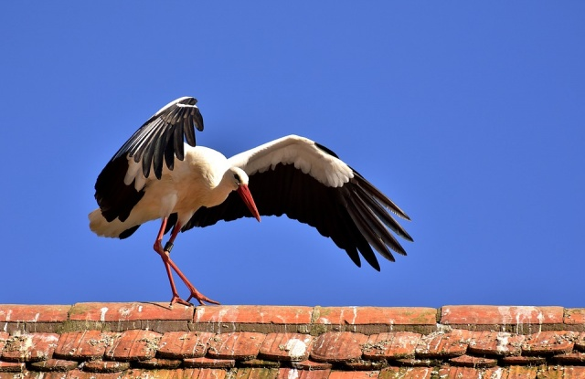 Bulgaria: Over the Last Few Days, People have Helped More than 30 Storks