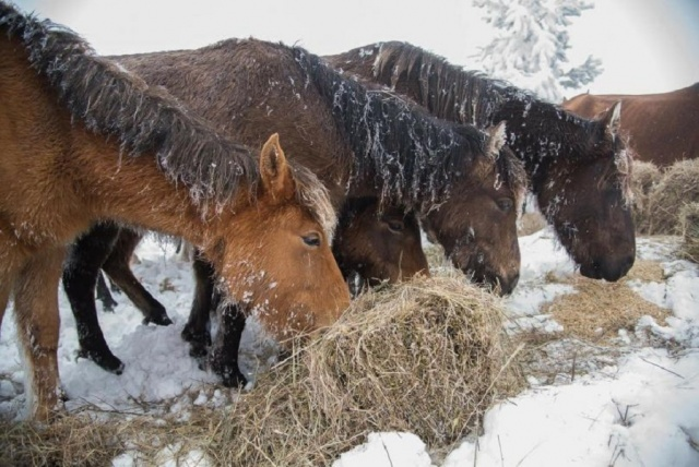 Bulgaria: Reuters: Bulgaria Opens Investigation After Scores of Horses Found Dead or Dying