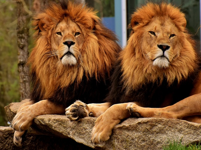 11 lions were killed in a suspected poison attack novinite com