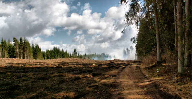 Bulgaria: Better Protection and Management of Land and Forests Across the Union: Council Adopts a New Regulation