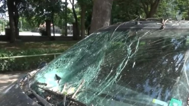 Bulgaria: Large Tree Fell on a Car on a Busy Street in Plovdiv