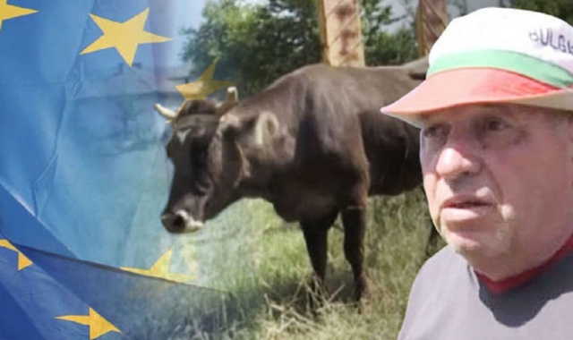 Bulgaria: Reuters: Penka the Bulgarian Cow Escapes Death Sentence after International Outcry