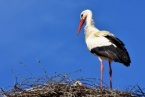 The First Storks that Landed in Bulgaria Remind us that Spring Coming