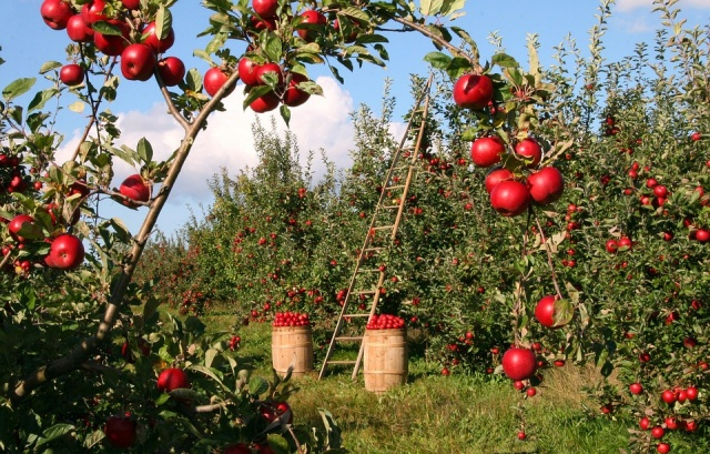 Bulgaria: The State Agriculture Fund Paid an Additional BGN 3 million to Farmers in the Fruit and Vegetables Schemes For Campania 2018