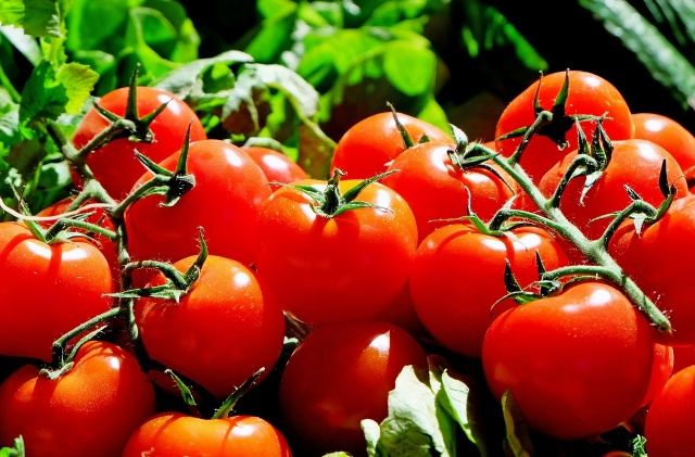 Bulgaria: Vegetable Producers Protest Against Low Purchase Prices of Tomatoes