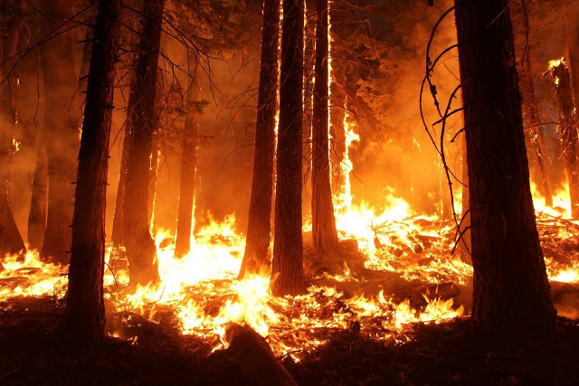 Bulgaria: Wildfire Raging near Kazanlak, 500 Decares of Pine Forest is Burning