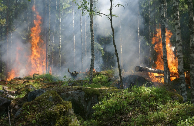 Bulgaria: Fire Burned Dozens of Decares of Forests near Vidin