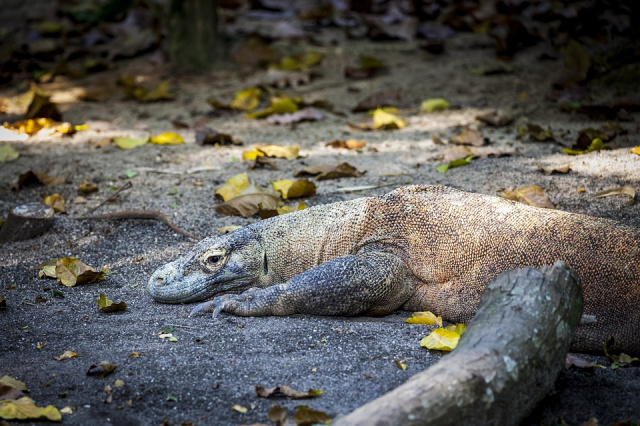 Bulgaria: Indonesia Won't Ban Tourists from Accessing the Komodo Islands