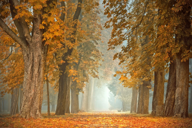 Bulgaria: NIMH: Foggy in the Morning, Mostly Sunny in the Afternoon