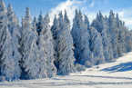Weather Forecast Bulgaria: Snow will Continue, Northeast Winds will further Bring Cold Air