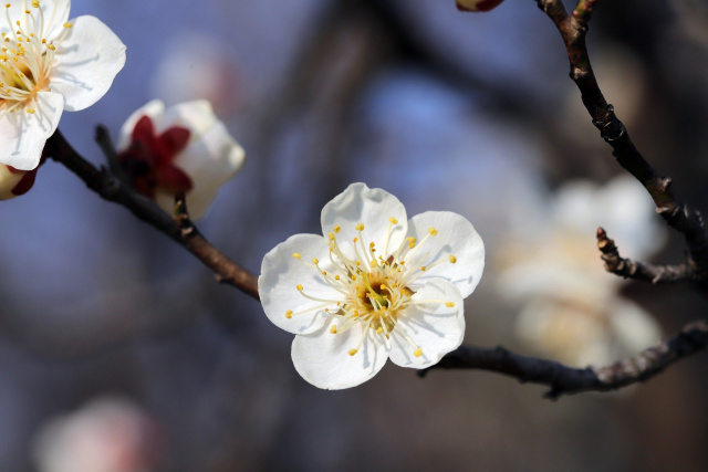 Bulgaria: The Astronomical Spring is Here