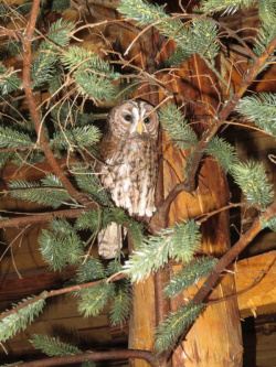 Bulgaria: Vitosha Nature Park: The Bear Museum and The Museum of Owls Open for Visitors