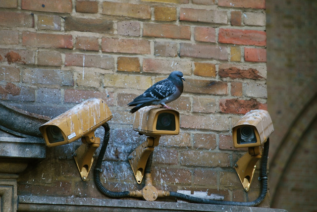 Bulgaria: India: A Pigeon Has Been Arrested And Accused of Being a Pakistani Spy