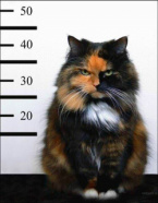 Cat Smuggled Heroin into Prison in Sri Lanka And When Detained - Escapes