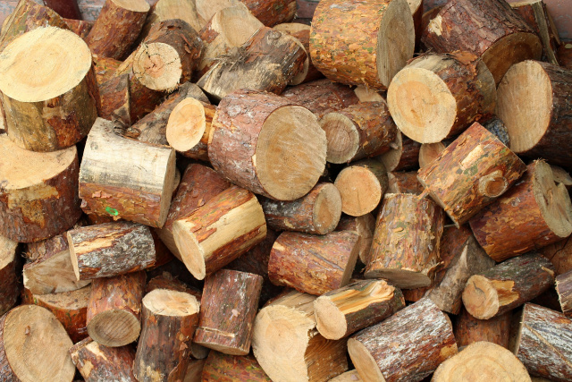Bulgaria: 9 People Involved in a Criminal Group for Illegal Extraction and Sale of Wood Have Been Detained