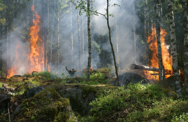 Bulgaria: Fire Burned Over 1,200 Decares Near Bulgaria's City Stara Zagora