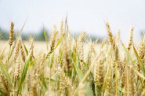 UN Report: Food Prices Rocket for First Time in 5 months