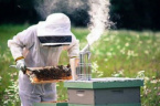 Bulgarian Beekeepers Angry with Agriculture Ministry's Inadequate Policies
