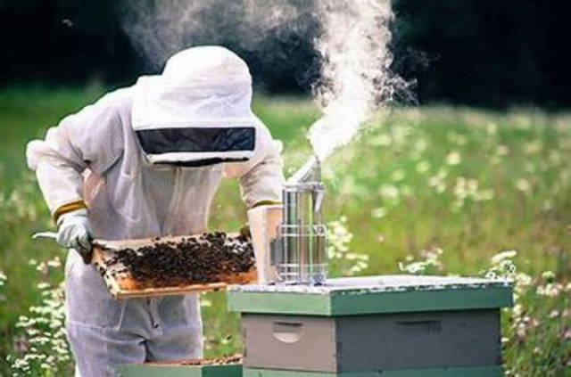 Bulgaria: Bulgarian Beekeepers Angry with Agriculture Ministry's Inadequate Policies