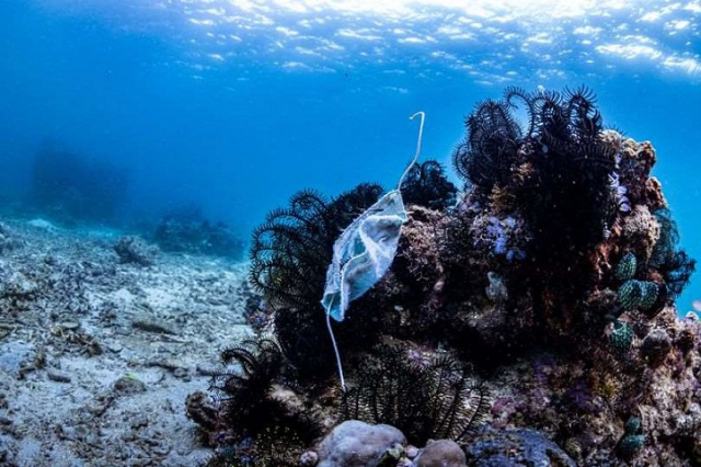 Bulgaria: Pandemic's Another Face – Disposable Masks Spark Surge in Global Ocean Pollution