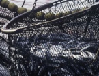 Overfishing Poses Serious Hazard to Black Sea Fish Populations