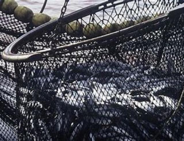 Bulgaria: Overfishing Poses Serious Hazard to Black Sea Fish Populations