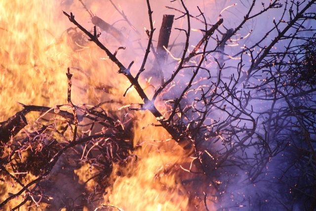 Bulgaria: Army Joins Fight against Large Forest Fire near Tvarditsa