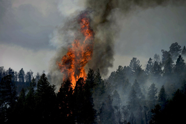 Bulgaria: More than 50 people Putting Out the Big Forest Fire in Kirkovo Municipality