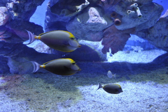 At the time of our visit the Hurghada Grand Aquarium was packed with European tourists
